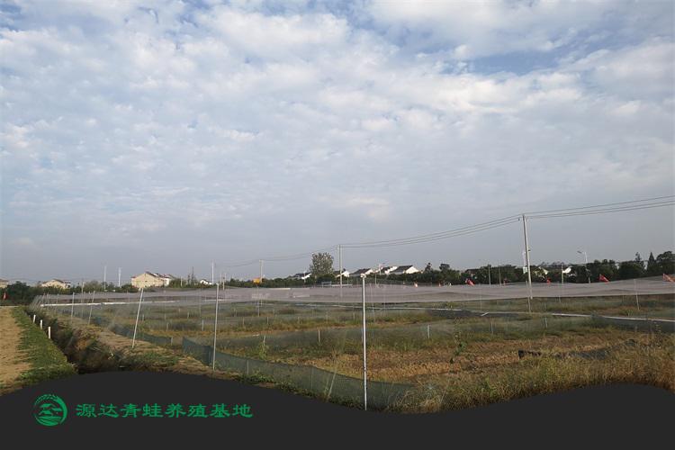 江苏省虎纹蛙种苗养殖基地地址