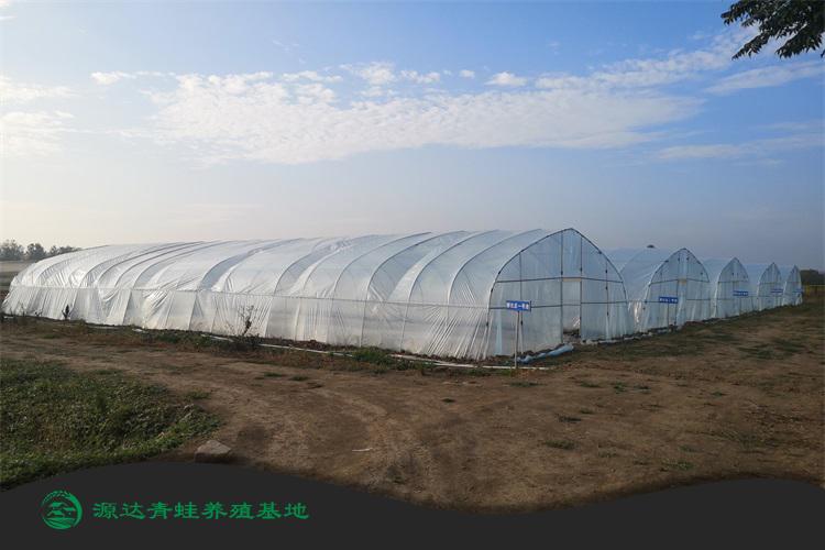 南昌青蛙种苗养殖基地售后服务