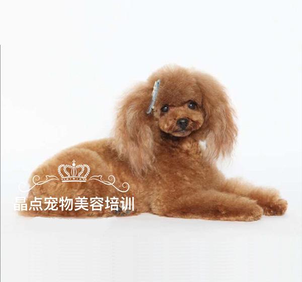 鞍山市宠物美容职业培训费用