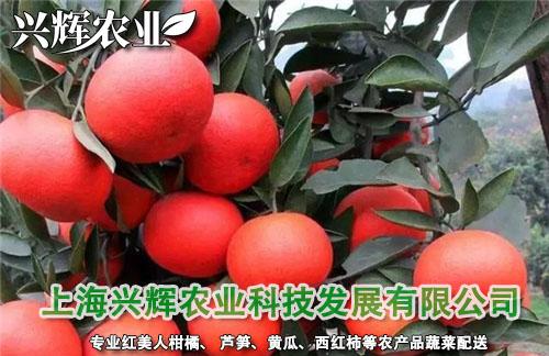 上海蔬菜水果配送公司哪家新鲜?