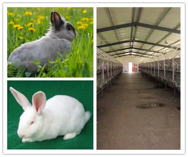 原阳农村肉兔养殖场在哪肉兔应该